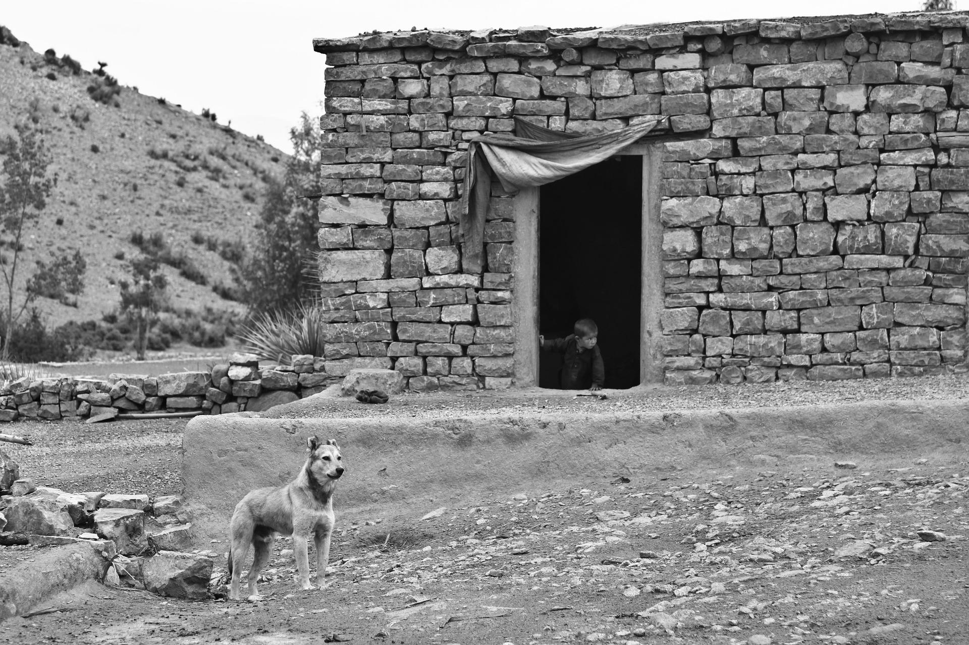 dog-60768_1920